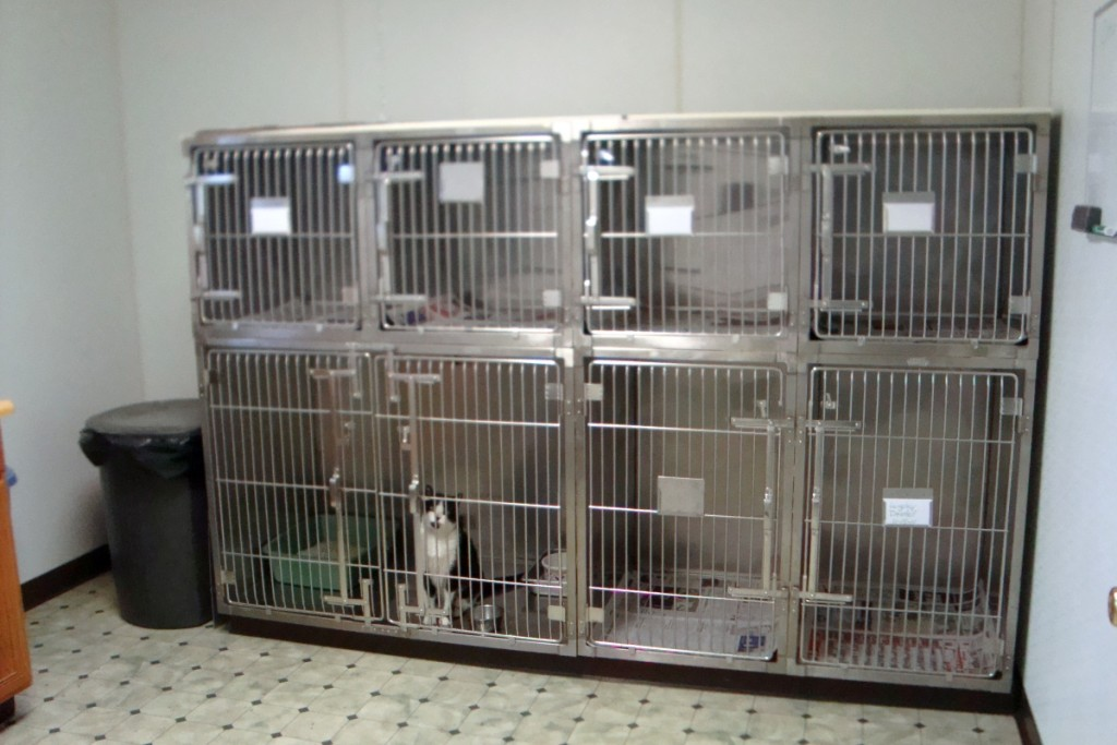 Cat Ward Cages